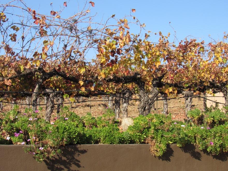 Wilson's Creek Winery